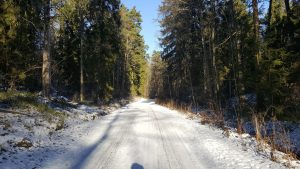 Forest walk sweden