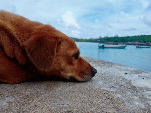 friendly dog on dock