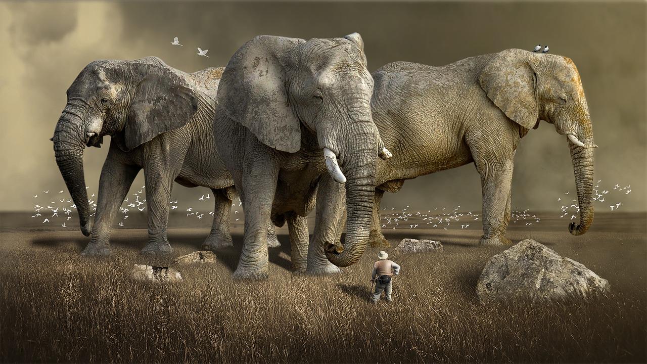 elefanter i drömmar