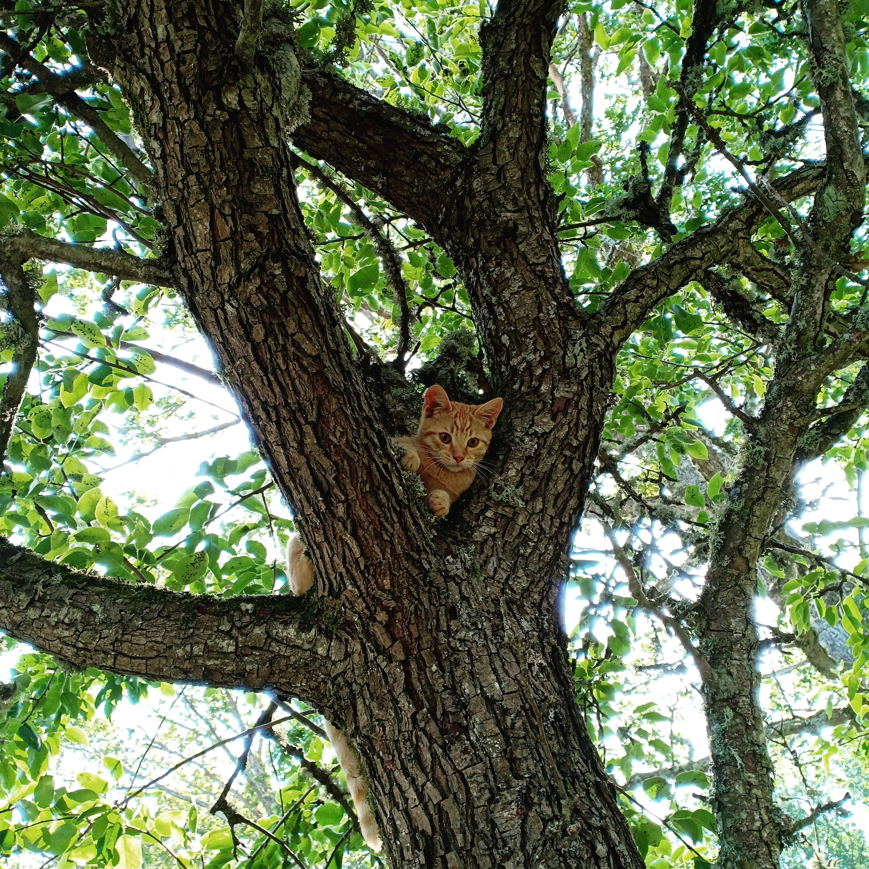 kattunge i träd