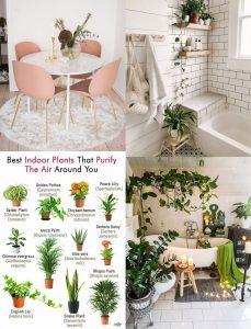 inspiration växter
