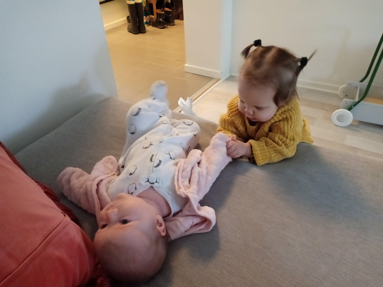 bebisar