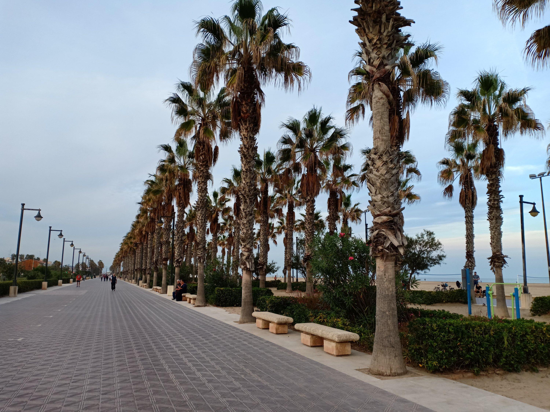 palmer i malvarosa beach
